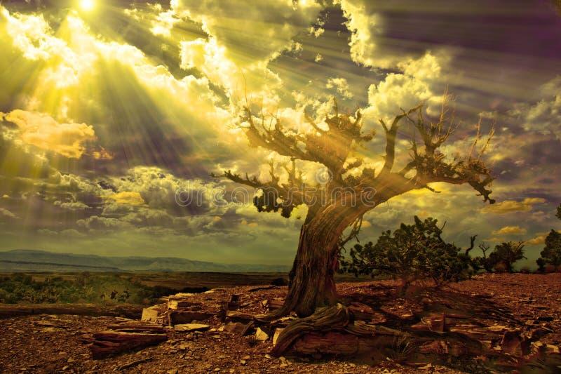 Rotsachtige woestijn stock illustratie