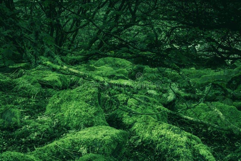 Rotsen die met mos op oude bosvloer worden behandeld royalty-vrije stock foto