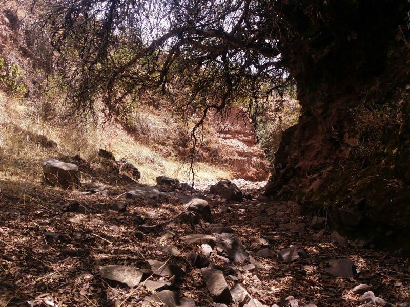 rotsen in droge rivier stock foto's