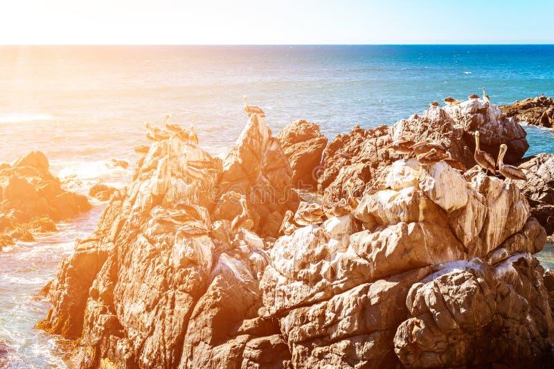 Rotsen met bruine pelikanen in Chili royalty-vrije stock foto's