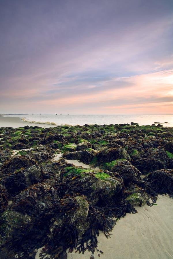 Rotsen met groen mos op het strand stock foto