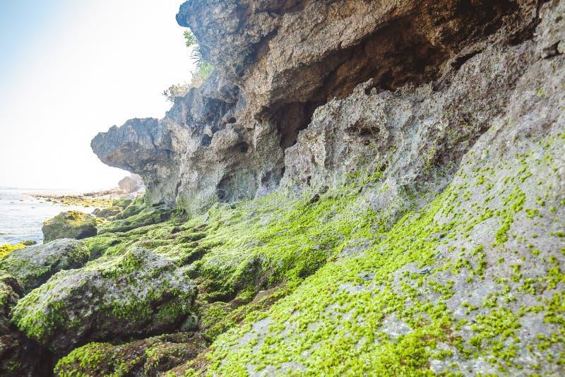 Rotsen met groene installaties dichtbij het overzees stock foto