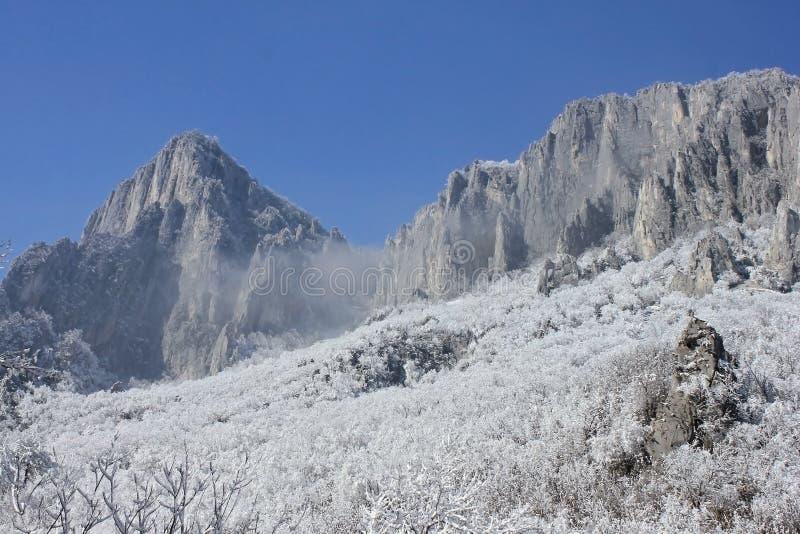 Rotsen, sneeuw en bomen royalty-vrije stock fotografie