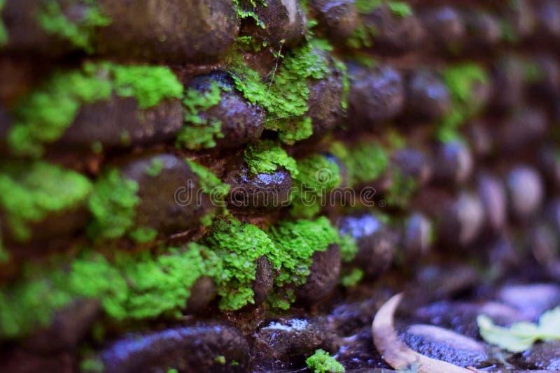 ROTSENmuur MET GROEN GRAS royalty-vrije stock afbeeldingen