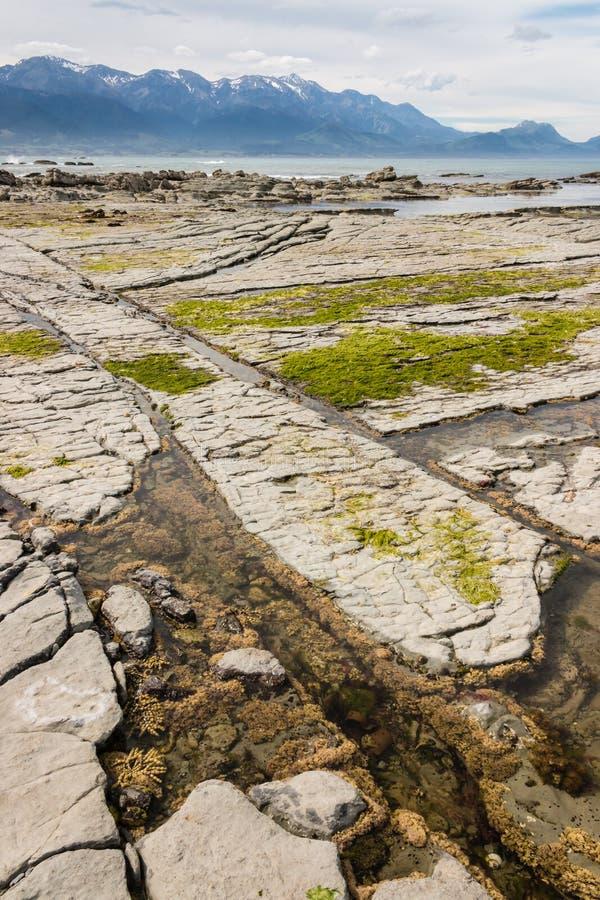 Rotspools met zeewier bij Kaikoura-strand royalty-vrije stock fotografie