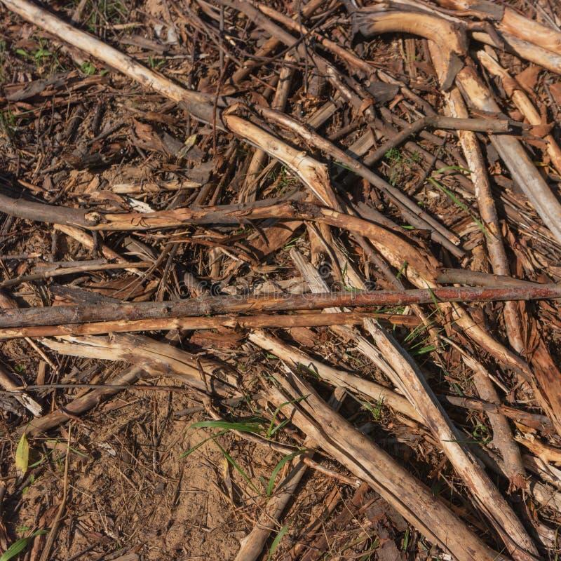 Rotte houten residu's op grond stock afbeeldingen