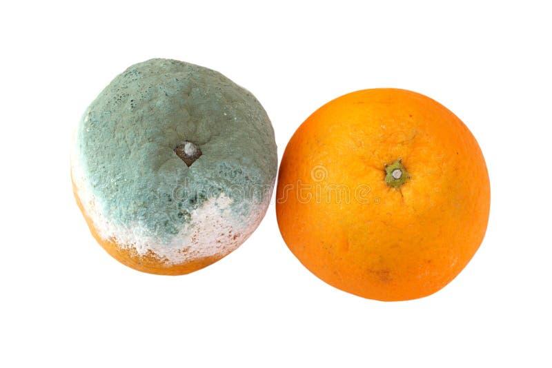 Rotte oranje en verse sinaasappel royalty-vrije stock foto's