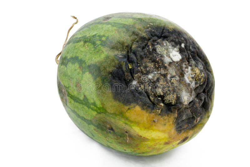Rotte watermeloen. royalty-vrije stock afbeelding