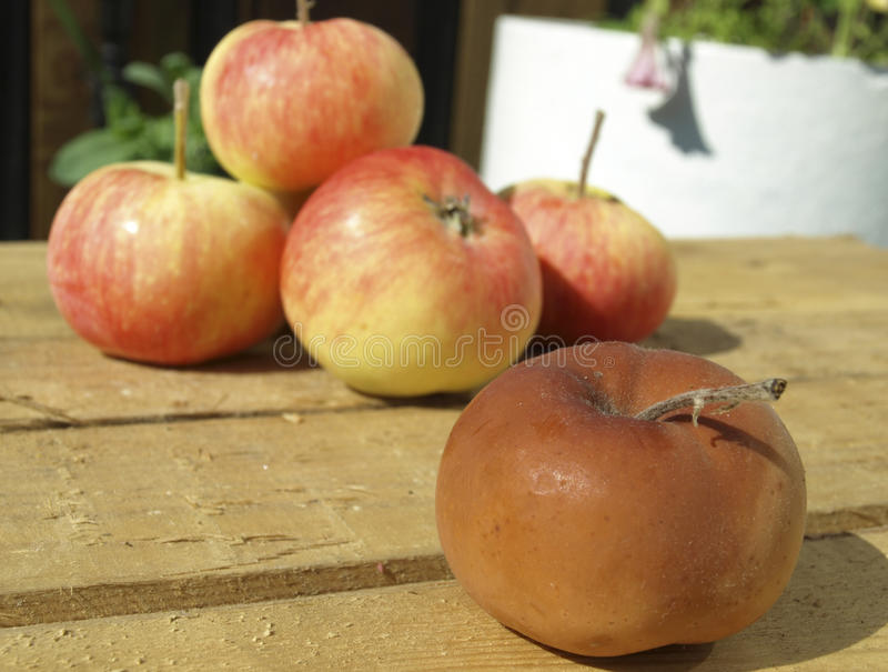 Rotten apple. Bad rotten apple on a background of good ripe apples royalty free stock photography