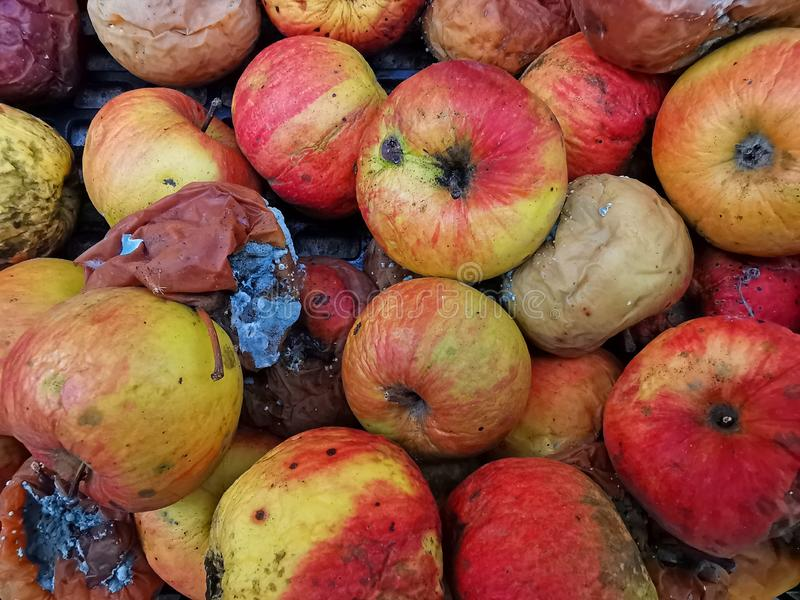 Rotten apple fruits as background. Sick and rotten apple as background. Dehydrated skin and bad apples, fruit, food, organic, nature, concept, natural, ripe stock image