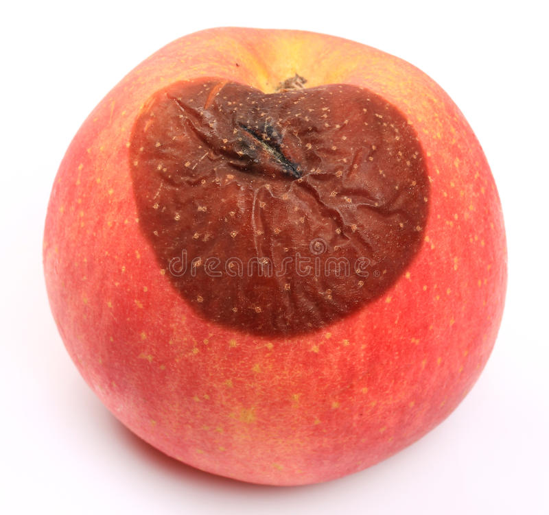 Rotten apple royalty free stock image