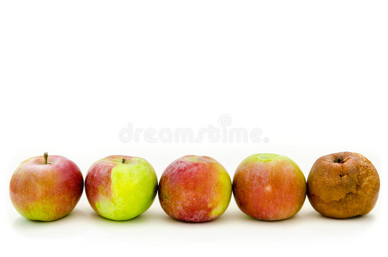 Rotten apple. With a lot of fresh apples stock photography