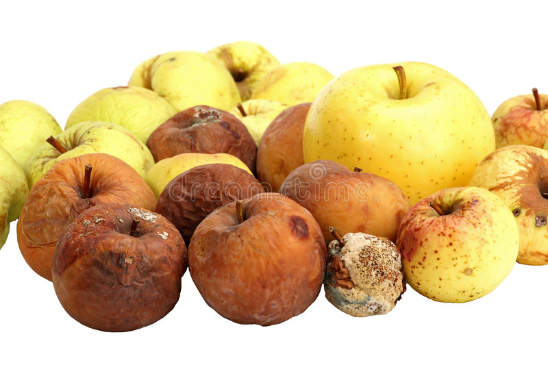 Rotten apples royalty free stock images