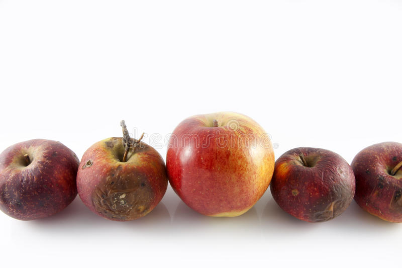 Rotten apples and good. Isolatet on the white background royalty free stock photos