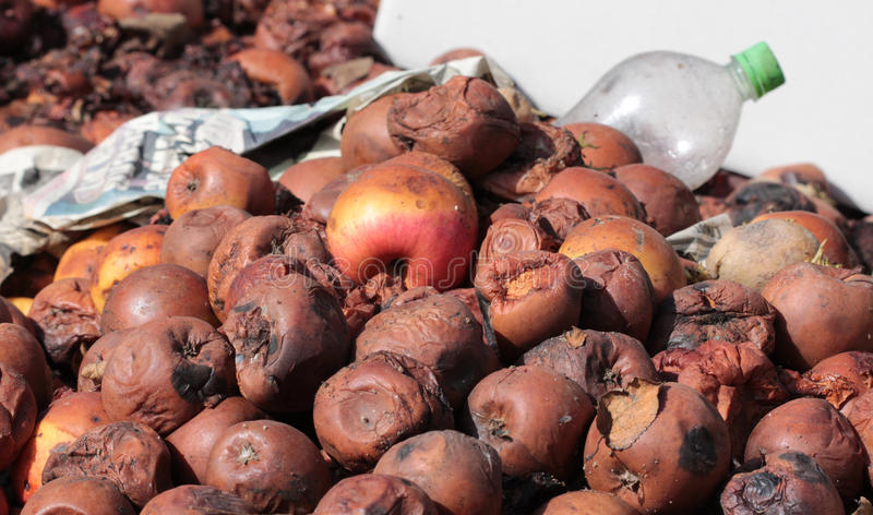 Rotten apples. Icture of a Rotten apples.organic pollution concept royalty free stock image