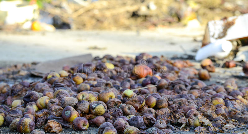 Rotten apples ,organic pollution concept. Image of a royalty free stock photos