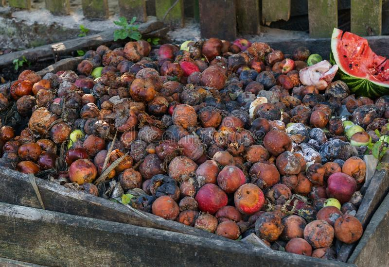 Rotten apples and other fruits on a compost heap royalty free stock photo