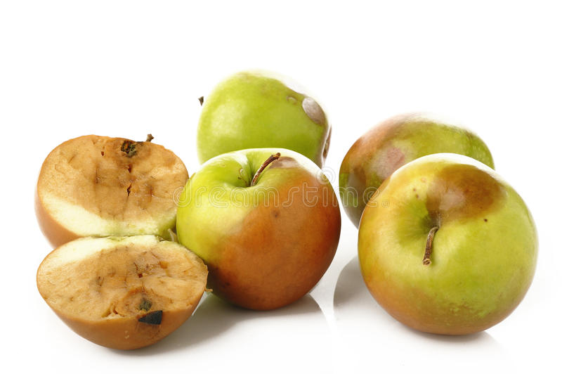 Rotten apples. On white background royalty free stock photo