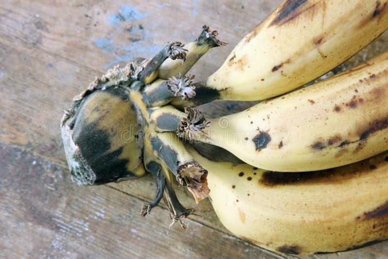 Rotten banana stock photography