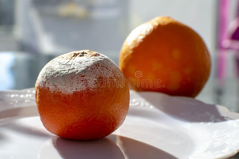 Rotten citrus. Penicillium mold on a mandarin fruit stock photo