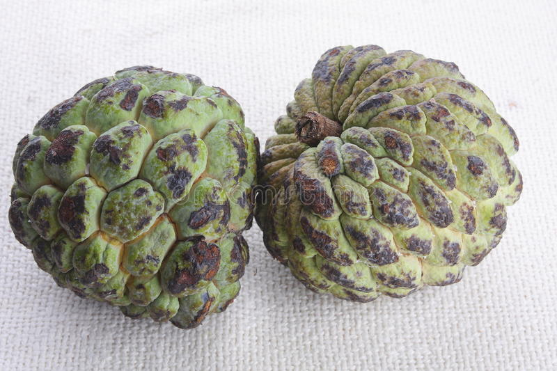 Download Rotten custard Apples stock photo. Image of decomposed - 36359804
