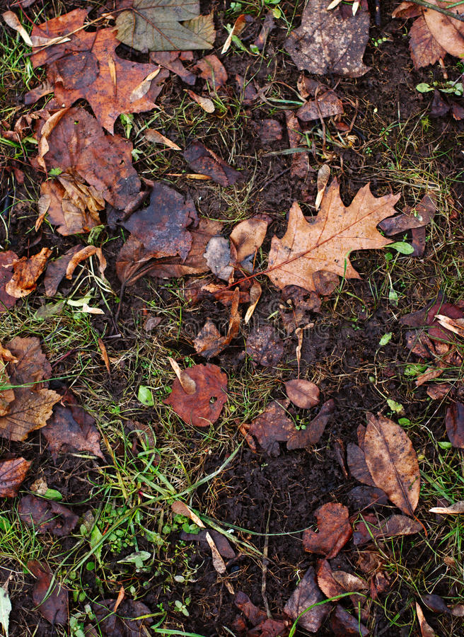 Rotten dead leaves on ground. royalty free stock images