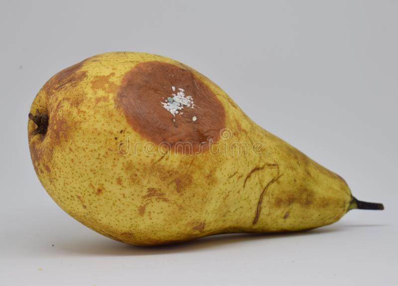 Rotten and decaying yellow pear on white background royalty free stock photos