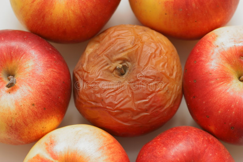 Rotten disgusting apple royalty free stock images