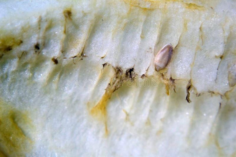 Rotten honeydew inside. A macro photo inside of a rotten honeydew royalty free stock photography