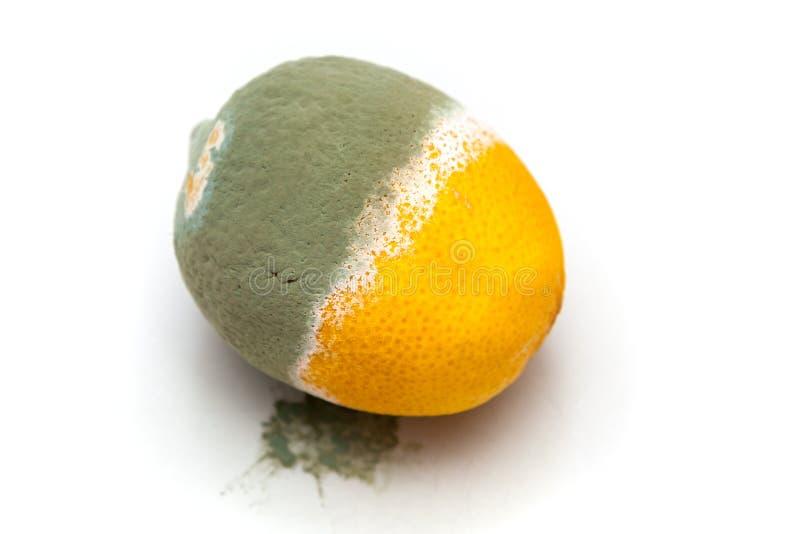 Rotten lemon on white background. Shot of rotten lemon on a white background stock photo