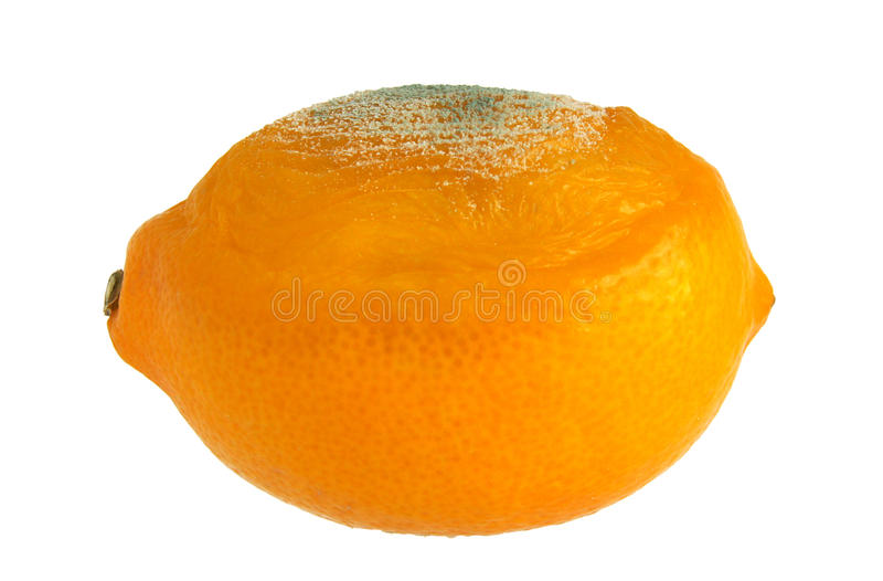 Download Rotten lemon on white stock image. Image of photography - 83701743