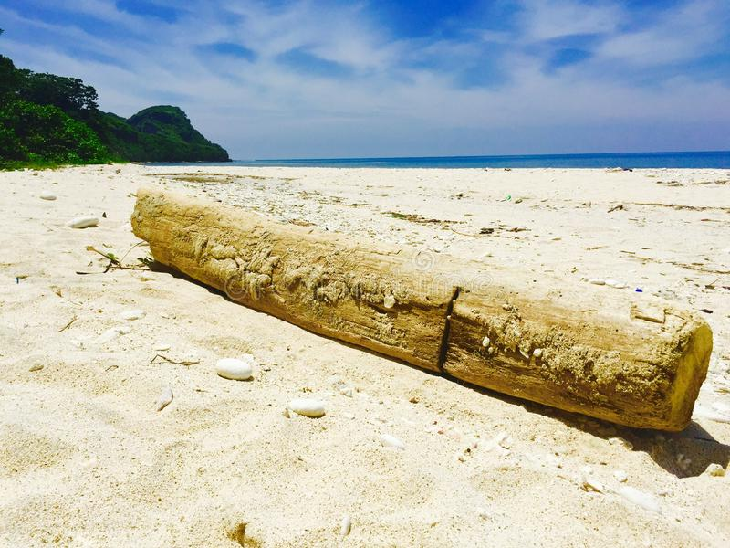 Rotten log lying on the long white beach of Capones Island stock image
