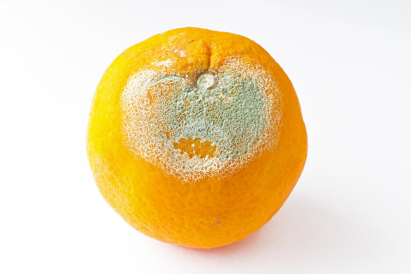Rotten Orange Royalty Free Stock Photography