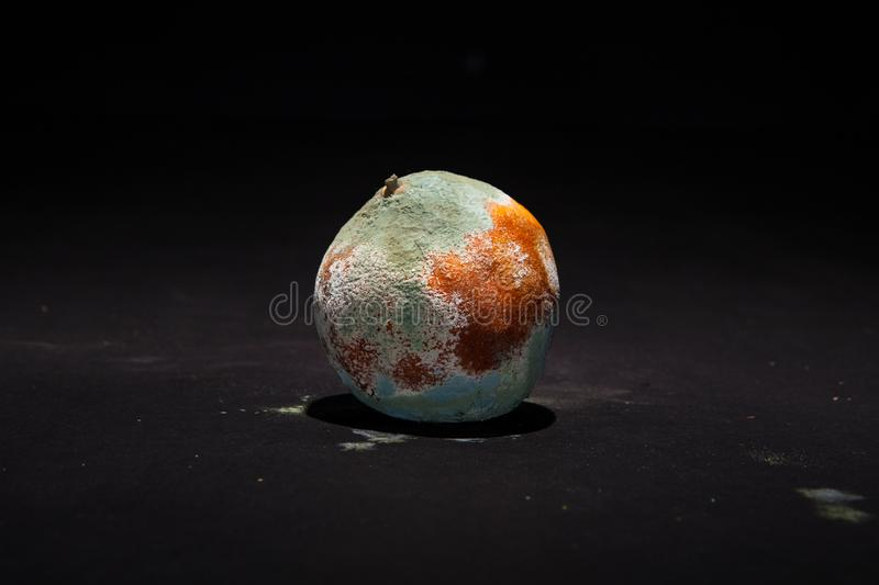 Rotten orange on black background. Broken fruit covered with green mold. stock image