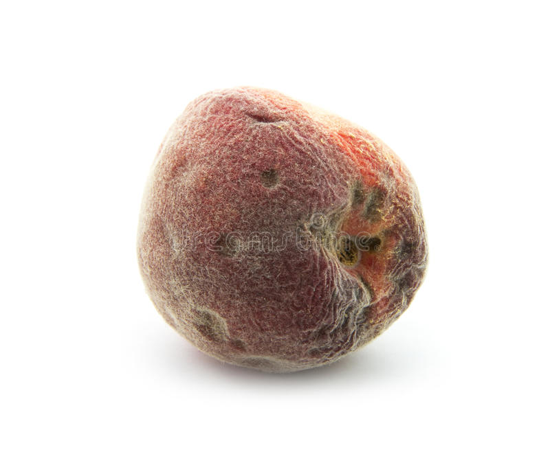 Rotten peach. Rotten old peach isolated on white background royalty free stock photo
