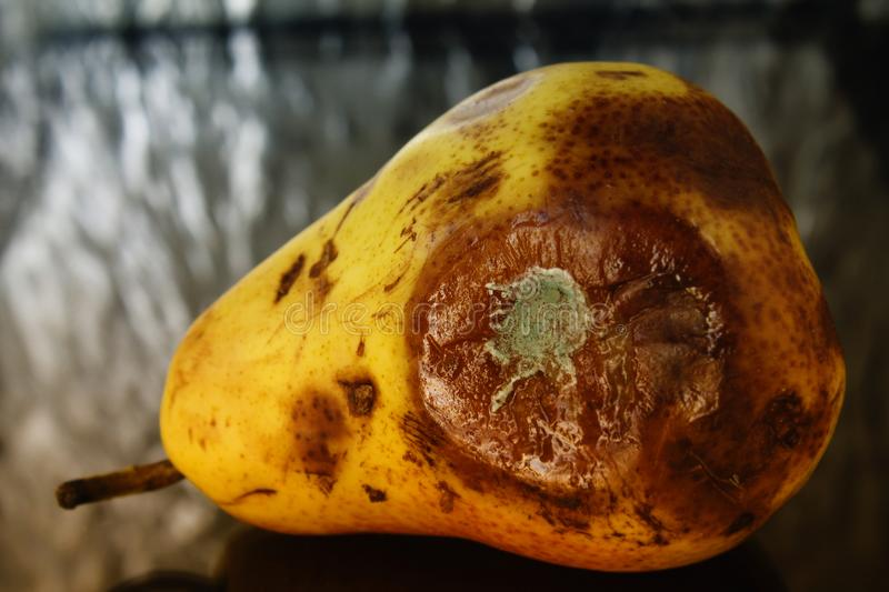 Rotten pear stock image