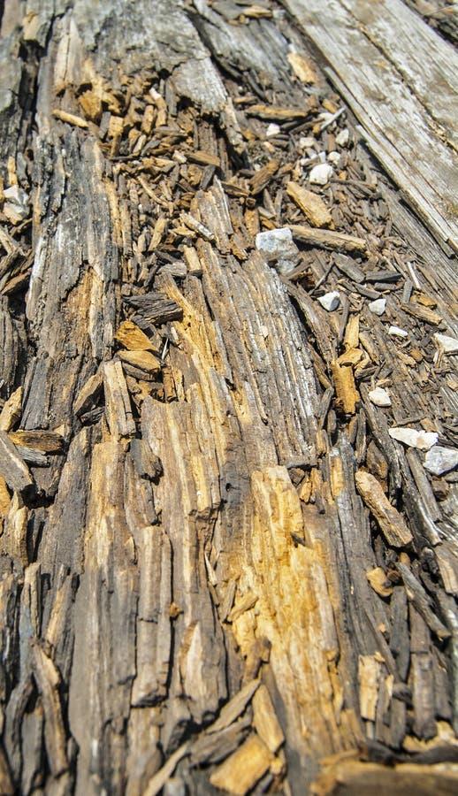 Rotten plank stock photos