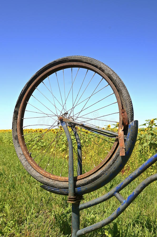 Rotten tire on old bike. A rotten bicycle tire and inner tube with a sunflower field in the background royalty free stock photo