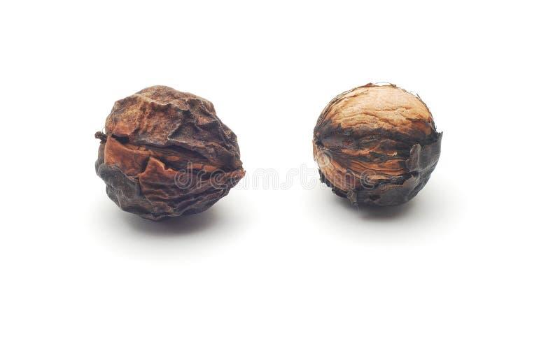 Rotten Walnuts Stock Photo