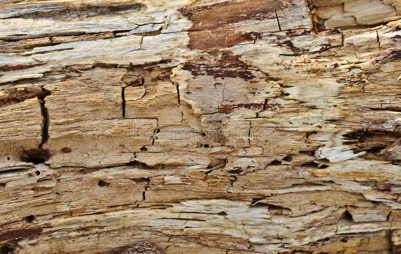 Rotten wood texture stock images