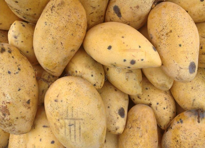 Rotten Yellow Mango royalty free stock photography