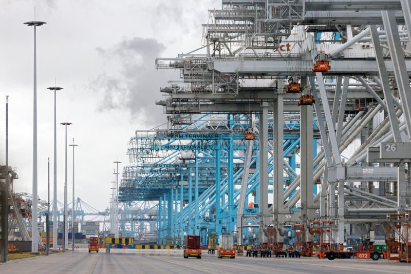 Rotterdam för behållareterminal port arkivfoto