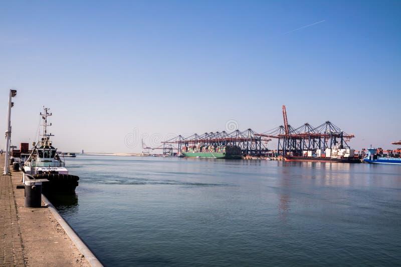Rotterdam, Paesi Bassi - 20 aprile 2018: Il grande porto cranes le navi porta-container di caricamento nel porto di Rotterdam fotografie stock