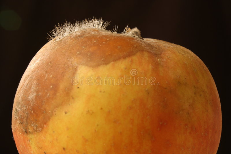 Rotting Apple 1 Royalty Free Stock Images