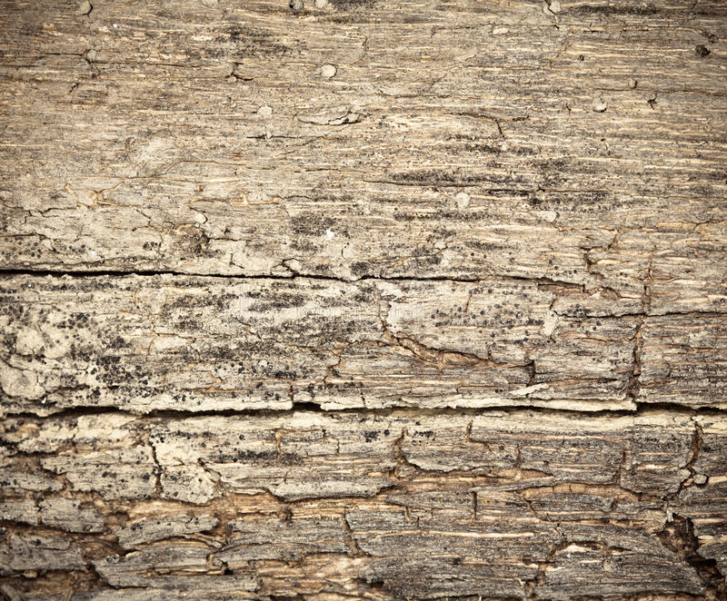 Download Rotting Dry Wooden Background Stock Photo - Image: 14157910