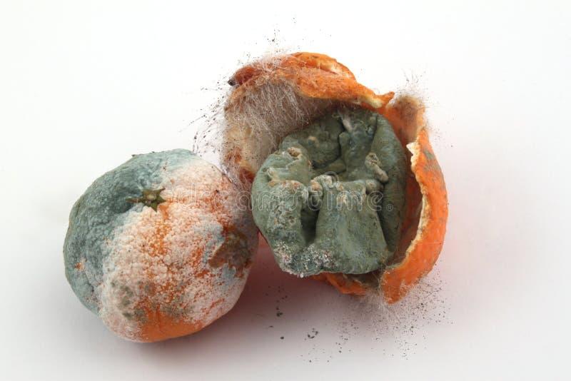 Rotting fruit stock image