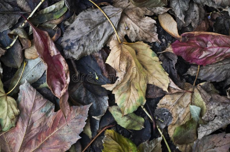 Story book leaf rot. Rotting leaves take on the colors of a faded dated story book illustration. vegitation colors red yellow pink green brown Geschichtenbuch stock images
