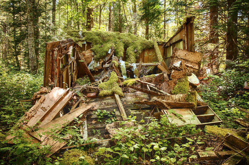 Rotting Old Shed In Forest. An old forest shack has been abandoned in a forest and has collapsed as it slowly rots in the rain forests of Washington State stock photos