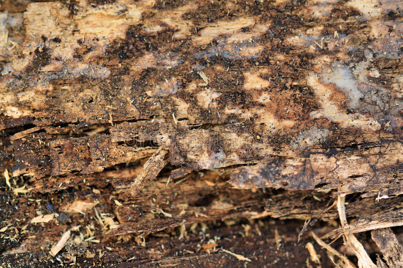 Download Rotting wood stock photo. Image of rotten, rotting, vintage - 18836400