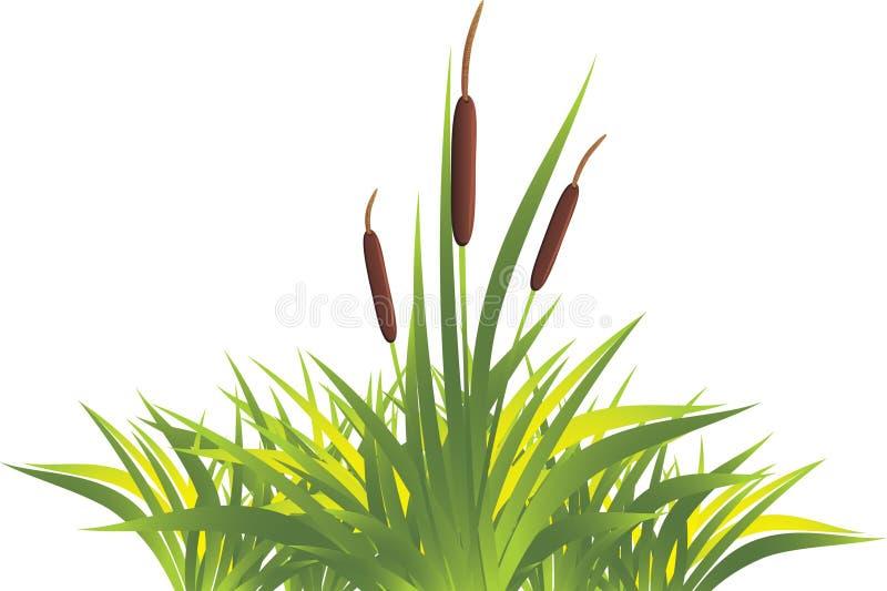 rottinggräs royaltyfri illustrationer